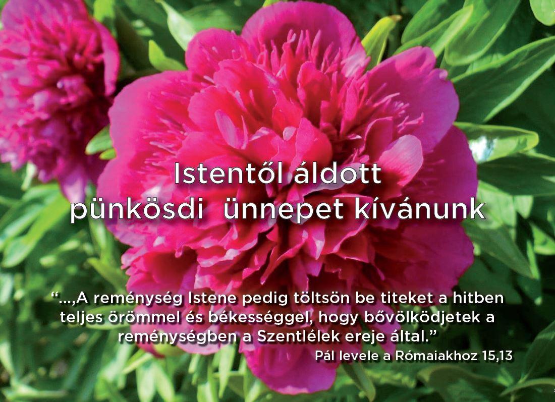 punkosd1